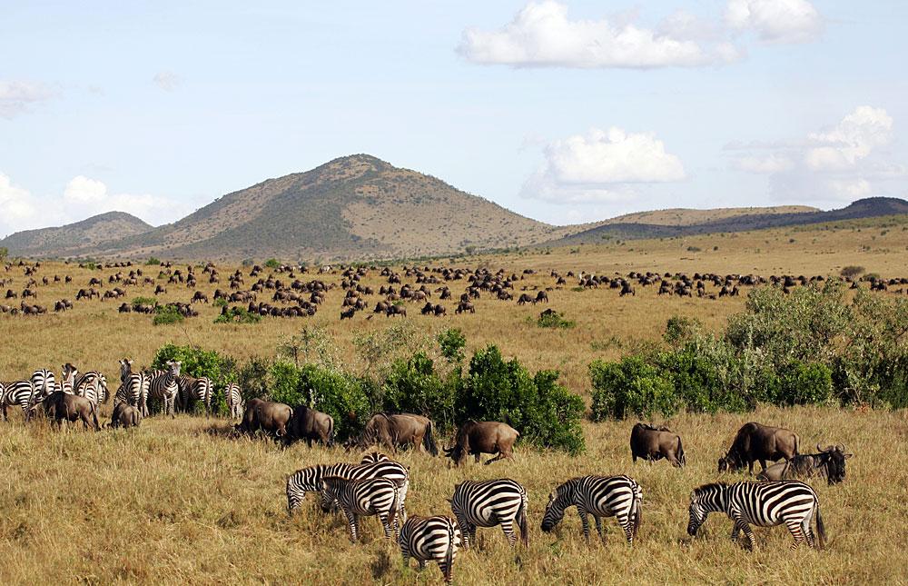 Masai Mara Game Reserve 1