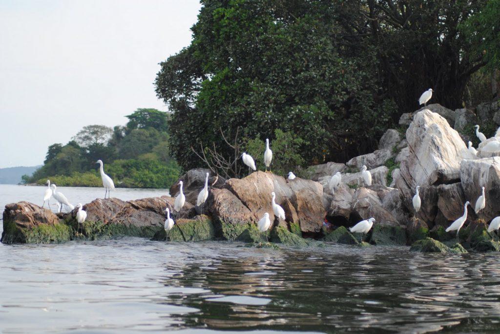 Rubondo-Birds