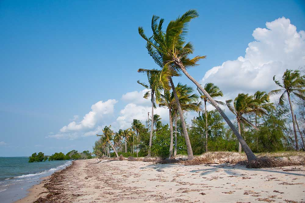 21223485 - coconut palms on the beach in the indian ocean - saadani national park in tanzania
