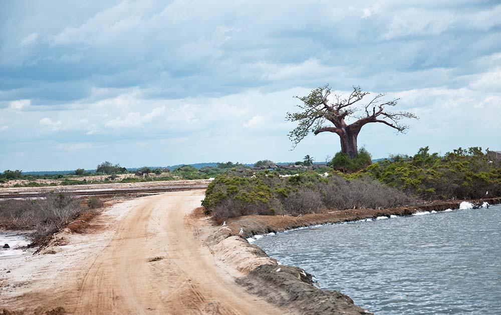 Saadani National Park (3)
