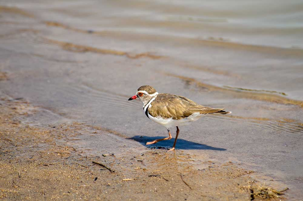 Selous Game Reserve (3)